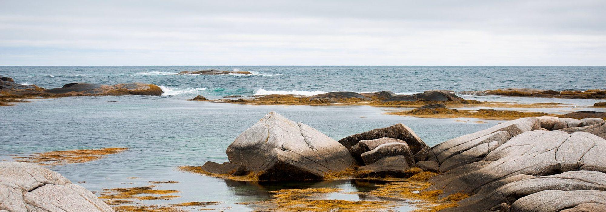 yellow-seaweed-on-ocean-rocks